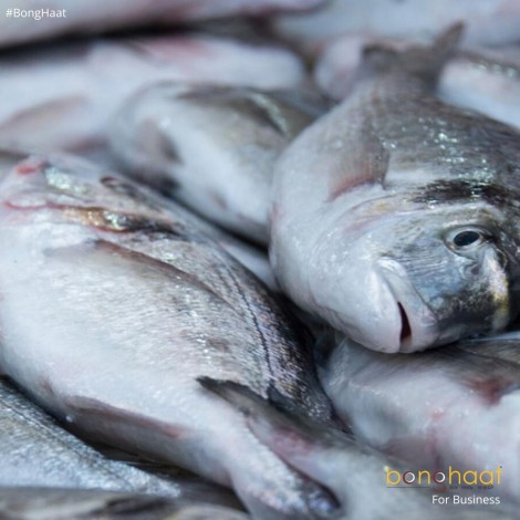 Book Fish in Bulk (Not for reselling)