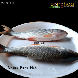 Charapona Fish (Maach) 1KG ( Cut and Cleaned)