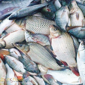 Book Fish in Bulk (Weekend Sales)